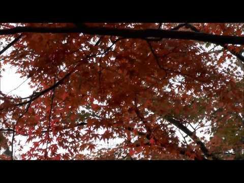 高雄 神護寺 金堂周囲の紅葉
