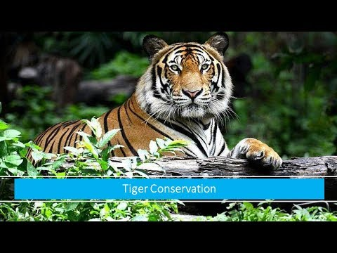 19  July,2017 Daily Editorial Discussion, Manual Scavenging, India-Australia, Tiger, Turkey, china