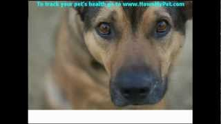 Canine Health Know-how