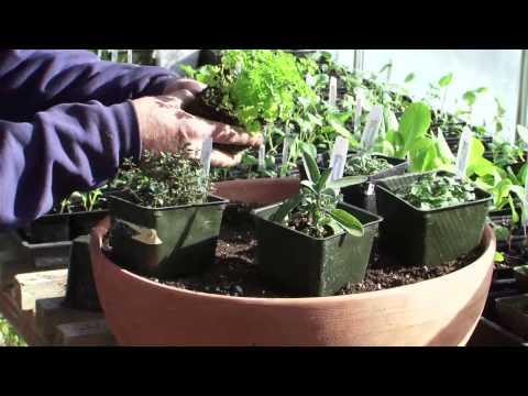 Planting Indoors: Growing an Herb Garden