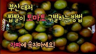 짭짤이토마토 대저토마토 구별하는 방법 속지마세요!