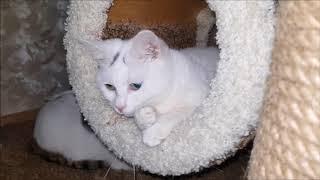 Жизнь в кошачьей коммуналке!