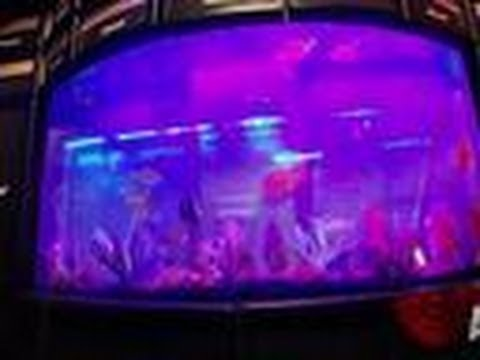 Reveal kiss tank tanked youtube for Fish tank full movie