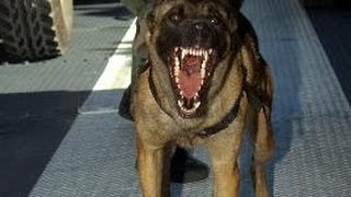 Dog Breeds With Most Attacks