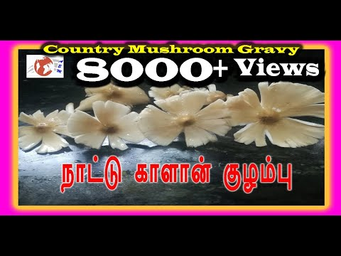Nature Fresh  Mushroom Gravy – Fresh Country Mushroom Gravy - நாட்டு காளான்  கிராமத்து குழம்பு