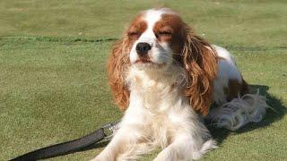 İstanbul Köpek Eğitimi Okulu [ Golden,Maltese Terrier,King Charles Eğitimleri ]