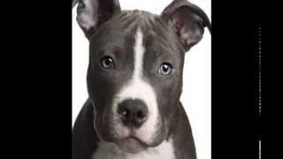 Собака - друг человека, а не машина для боёв!