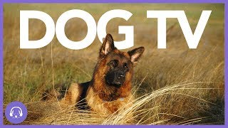 Dog TV: Exciting Dog Entertainment Movie! (2019)