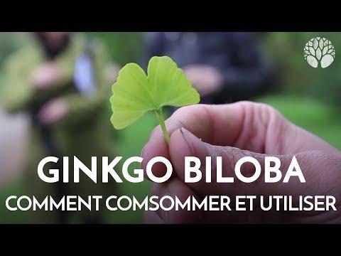 Propriétés Ginkgo Biloba - Le ginseng pour stimuler la concentration et la concentration