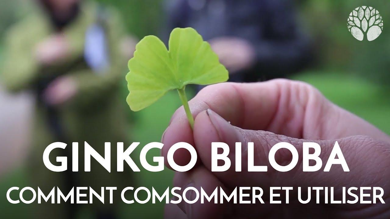 COMMENT CONSOMMER ET UTILISER LE GINKGO BILOBA