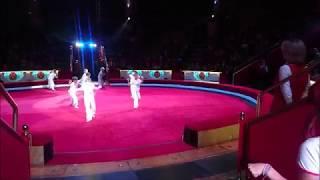 цирк 29 10 17 капоэйра