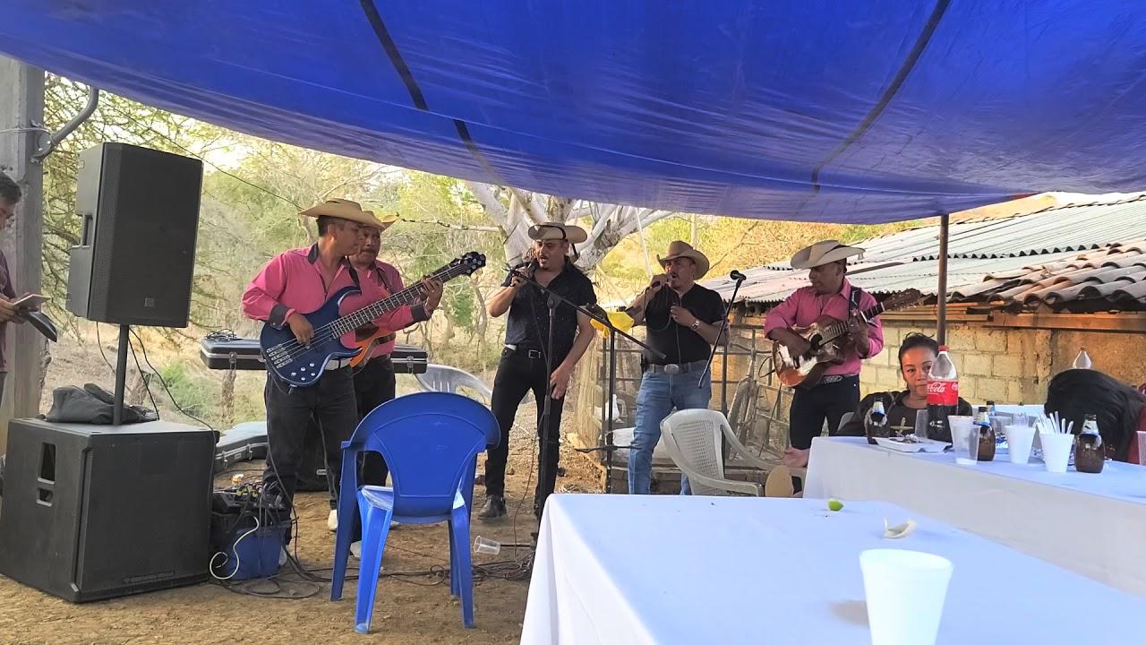 Palomazo con Tejones de la Sierra de mero Tejupilco Mexico