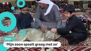 Dit gezin leeft met wolven