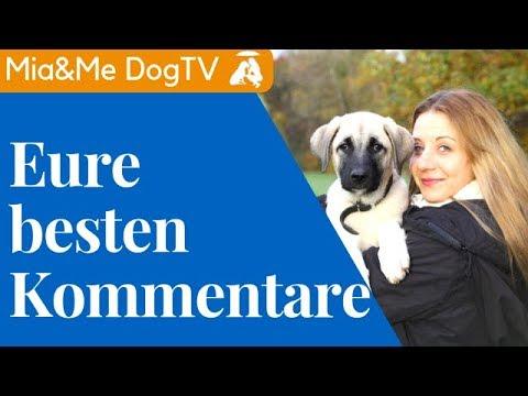 Jenny kommentiert Kommentare / Mit einem Türken zusammen? / Mia and Me DogTV