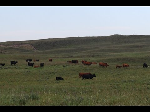 The Nebraska Beef Story