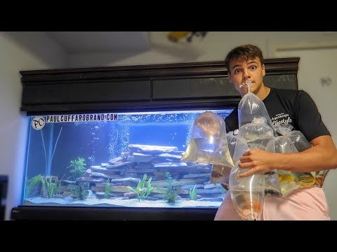 BUYING NEW FISH for AQUARIUM!!