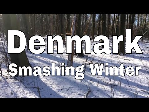 Walking in the forest at wintertime in the Copenhagen area - HD video