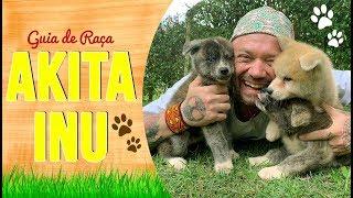 GUIA DE RAÇA AKITA | RICHARD RASMUSSEN