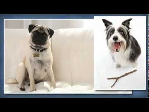 Woofs Dog Training Center - Arlington, VA