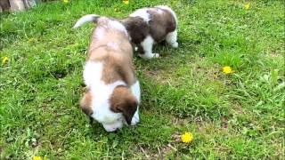 子犬が生まれていますよ http://www.woof.jp/sb.html 3月7日生まれの男...