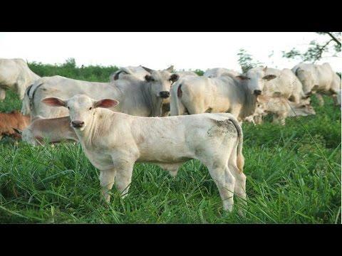 Clique e veja o vídeo Curso Produção de Leite Orgânico - Manejo de Pastagem