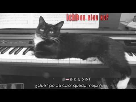 Kuroneko to pianist no tango – Kanon Wakeshima (sub español + lyrics)