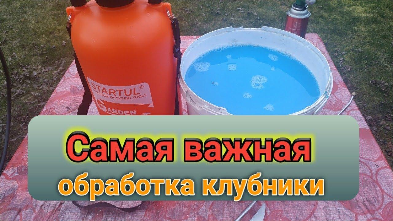 Самая ВАЖНАЯ первая обработка клубники весной. Belklubnika.by