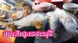 EP#16 ปลาม้า สุพรรณบุรี เดินตลาดเทศบาล1