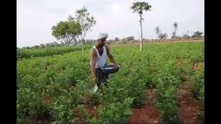 Organic Farming (The ancient Indian Tradition)