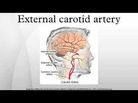 External carotid artery - YouTube