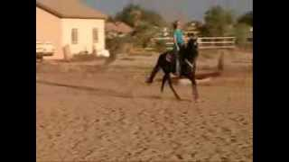 """Shawnee Storm"" 2006 Thoroughbred Mare for sale"