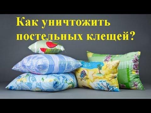Как бороться с постельными клещами