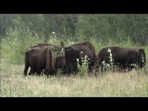 Wood Buffalo National Park - Northwest Territories/Alberta, Canada