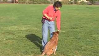 Shaping Dog Tricks: Somersaults | drsophiayin.com
