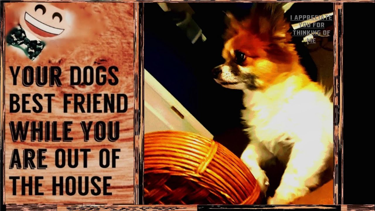 ♨ 30mins -CALMEST DOG MUSIC EVER produced_RELAX_ animal sound therapy +  free mp3
