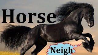 Horse: Animals for Children Kids Videos Kindergarten Preschool Learning Toddlers Sounds Songs Farm