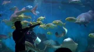 My Trip To Australia - Part 2 (melbourne Aquarium)