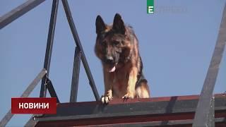 На Донеччині готується до відкриття кінологічний центр поліцейських собак