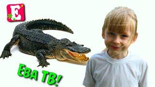 """Влог на канале Ева ТВ """"Шоу крокодилов на острове Пхукет""""."""