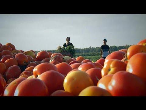 Pourquoi ne pas faire pousser des tomates dans le d sert - Faire pousser des tomates ...