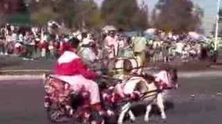 Miniature Horses And Donkey Pulling Carriages
