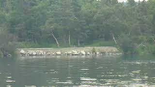 Bear Cam - Lower River Cam 07-22-2018 08:00:52 - 09:00:52
