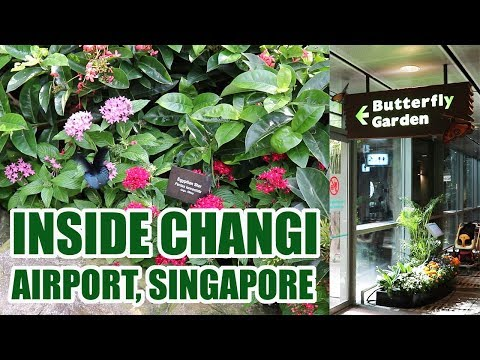 Butterfly Garden Inside Changi Airport Singapore | Unbelievable