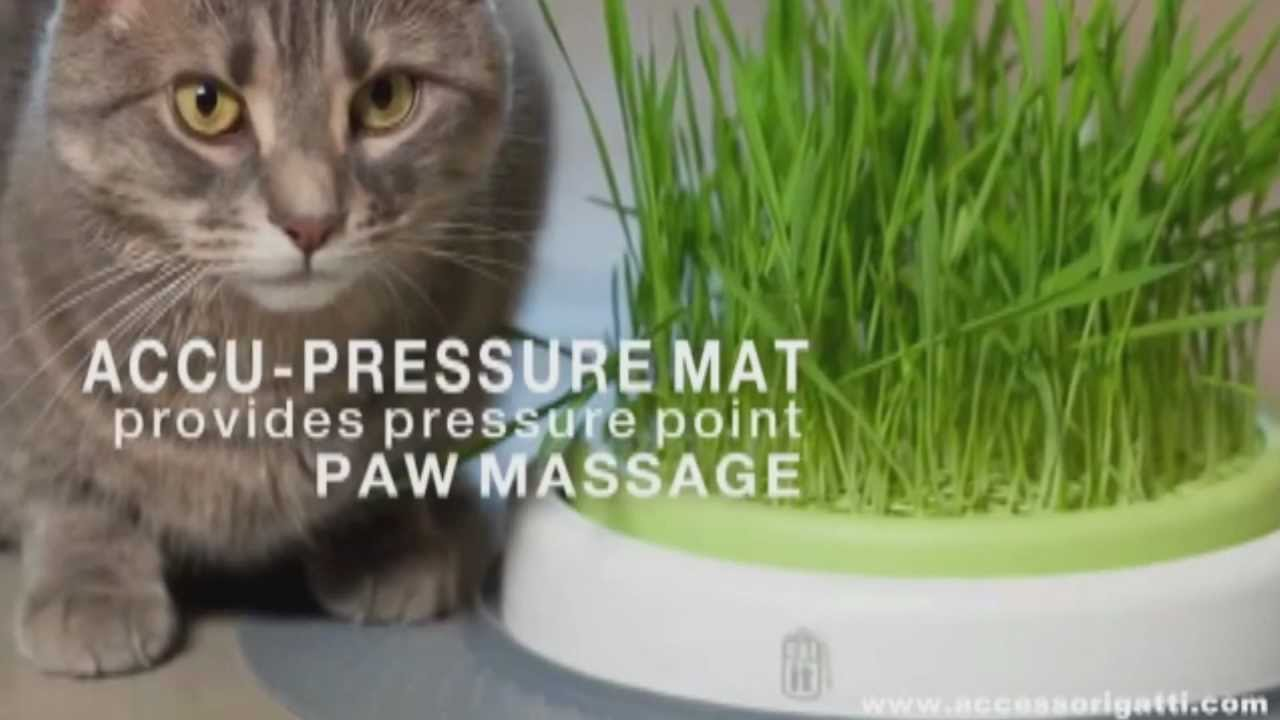 Catit Design Senses Grass Garden Kit Su Accessorigatti Youtube