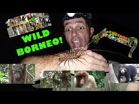 WILDLIFE TRAVEL CHANNEL - ADVENTURE BORNEO