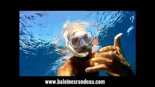 Baleines Rand'eau_Banc de 12 Requins Marteau en snorkeling !!!