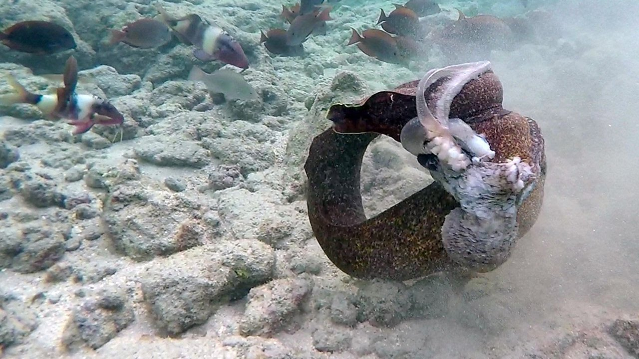 eels in girls pussy
