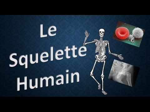 hqdefault - Un bébé a-t-il plus ou moins d'os qu'un adulte ?
