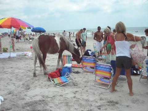 Horses In Virginia Beach The Best Beaches World