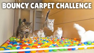Bouncy Carpet Challenge! | Kittisaurus